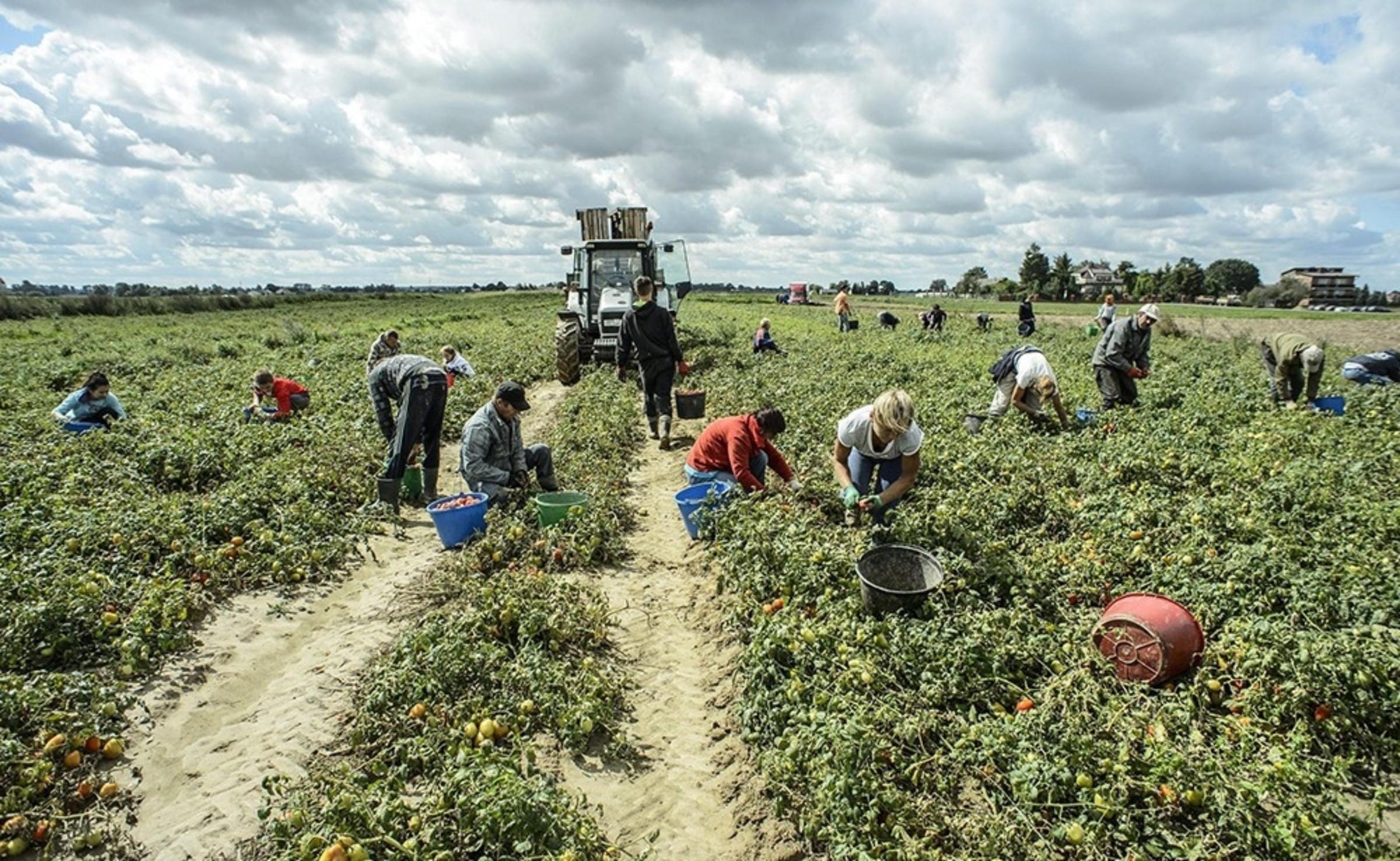 Stop al caporalato. L'appello del coordinamento provinciale di Avviso Pubblico per attivare la Rete del lavoro Agricolo di Qualità